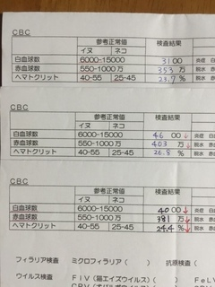 20150908-1mamo.JPG